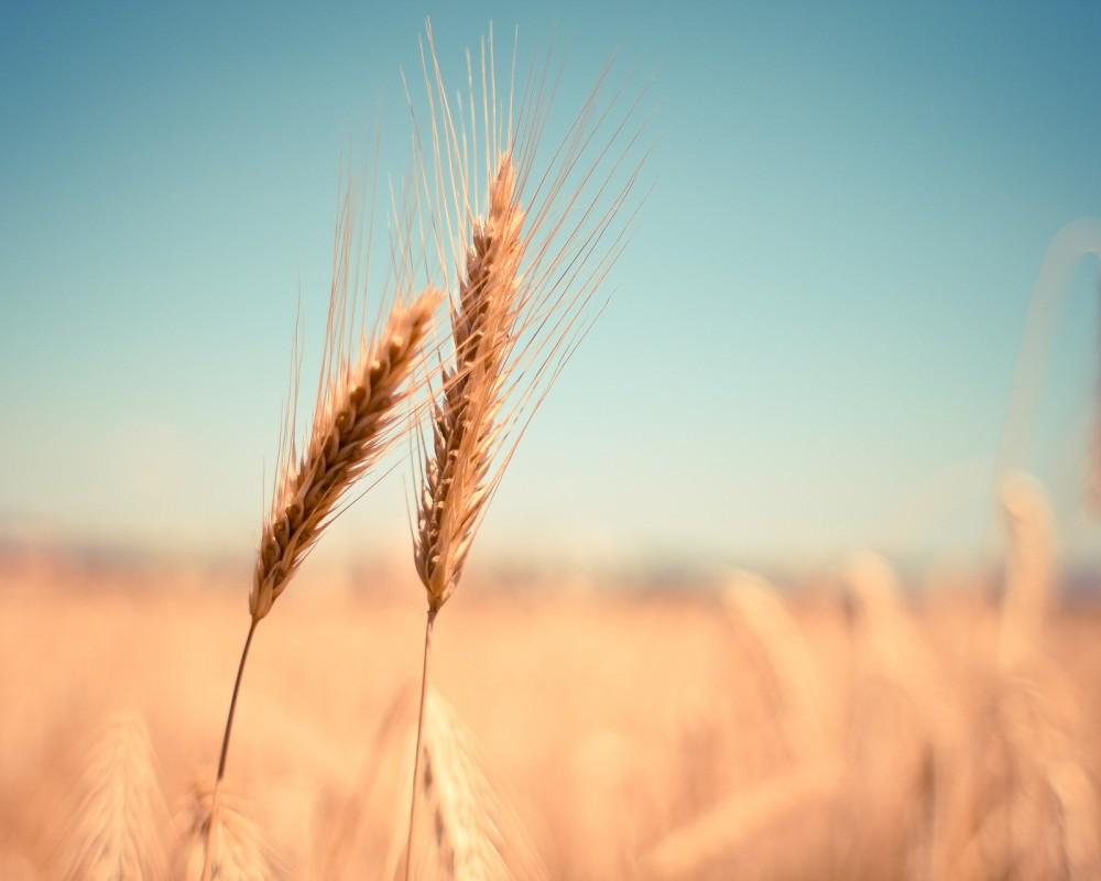 Soluções para o AGRO